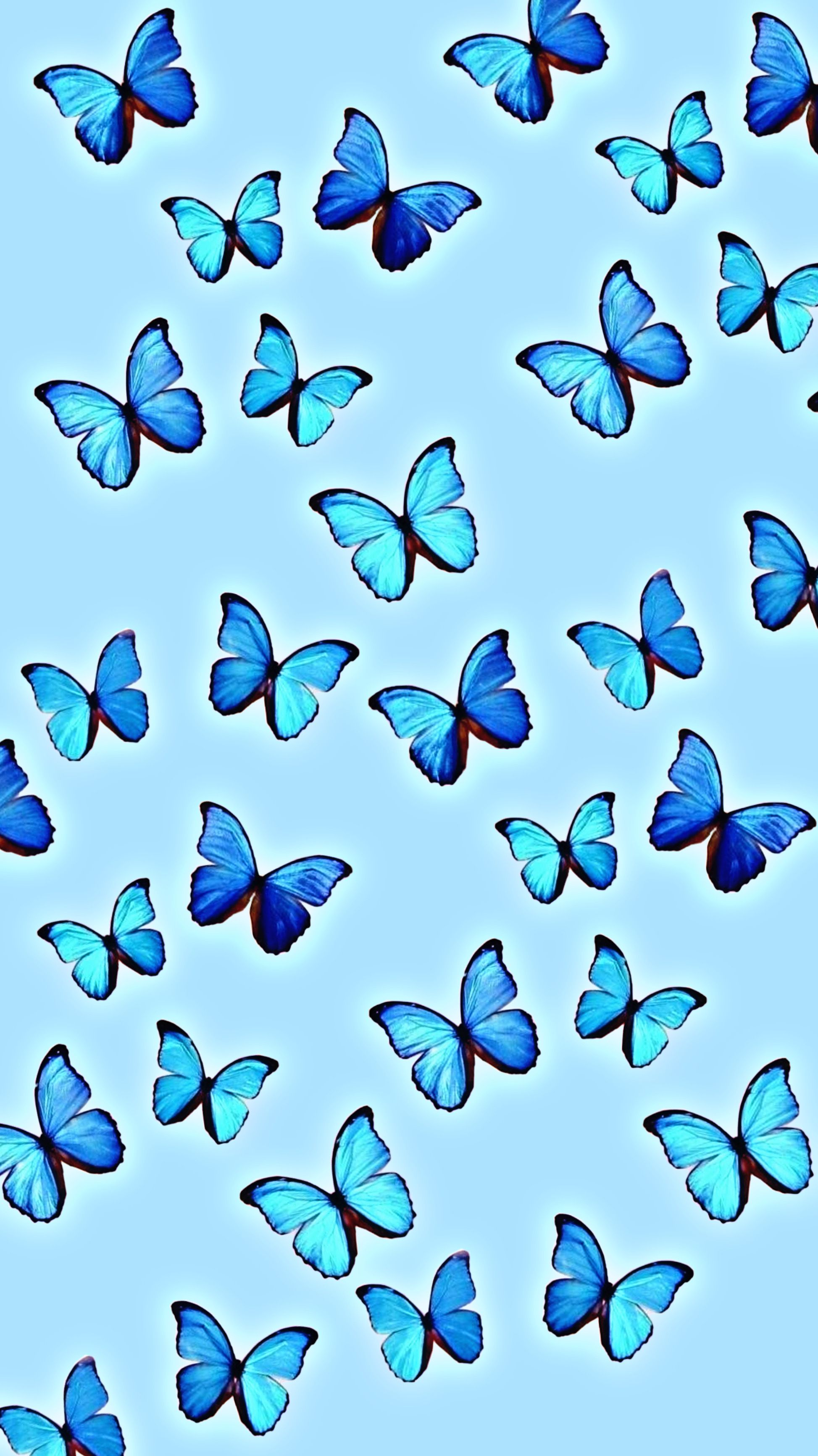 Pin By Xxanaxb On Aesthetic Iphone Wallpaper Blue Butterfly Wallpaper Butterfly Wallpaper Pretty Wallpaper Iphone