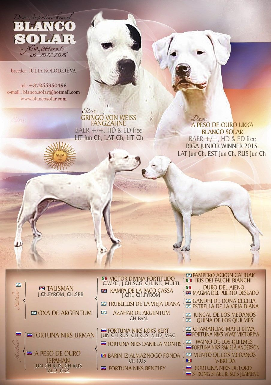 Kutsikad Dogo Argentino Kennel Blanco Solar Dog Argentino