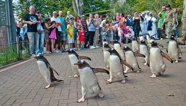 Top 8 Appealing Places To Visit In Edinburgh Edinburgh Zoo Edinburgh Places To Visit