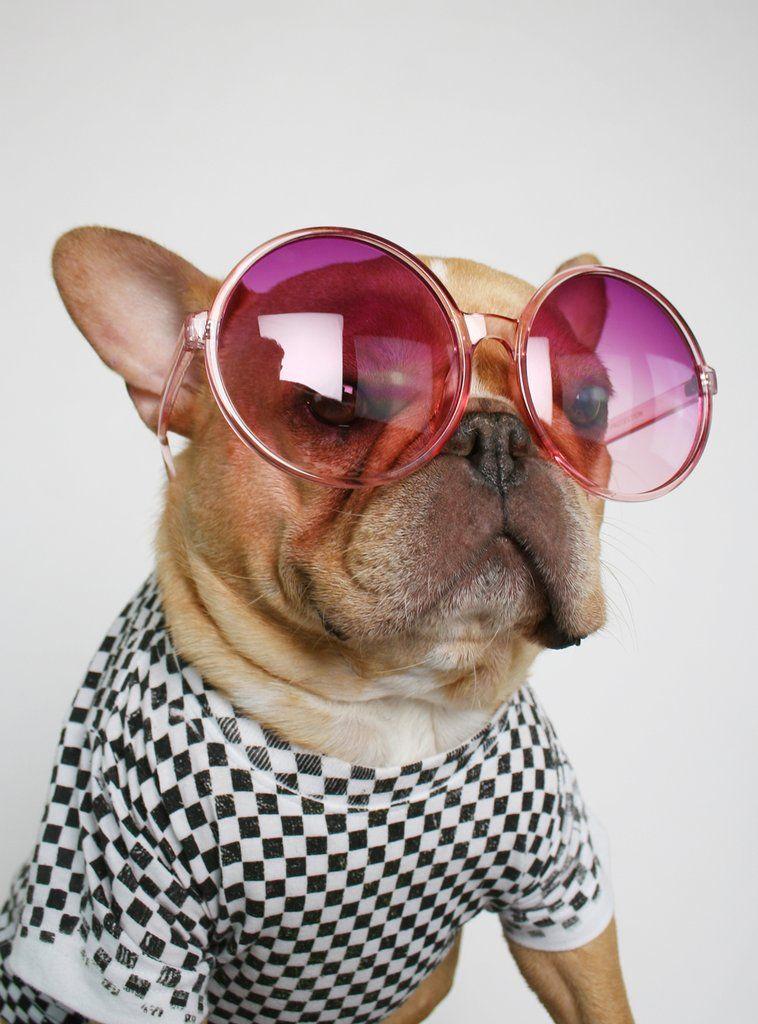 The Jackie Sunglasses Bulldog Puppies Cute French Bulldog Cute