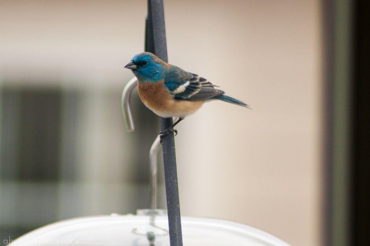 Backyard birding for beginners backyard birds birds
