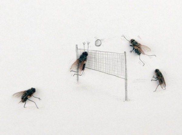 Image result for Magnus Mehr fly
