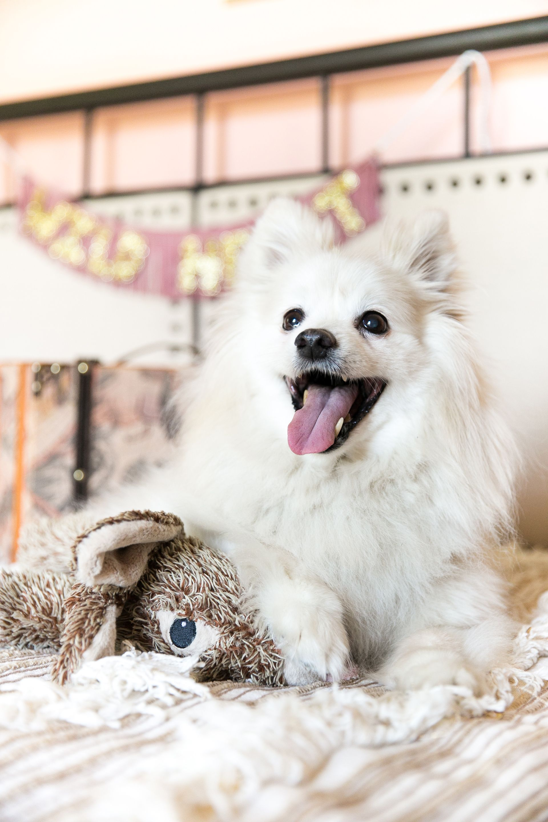 Tips For Traveling With Your Dog Flying Hotels Activities In 2020 Dog Friendly Hotels Dog Travel Pet Travel