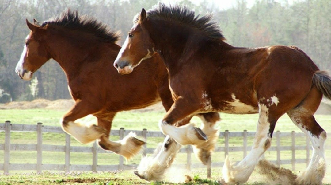 Pin by Larisa Van Breda on Horse (With images