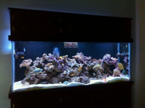 180 Gallon Custom Saltwater Reef Aquarium by Sunset Aquatics (with the help of our clients Andy and Katie)