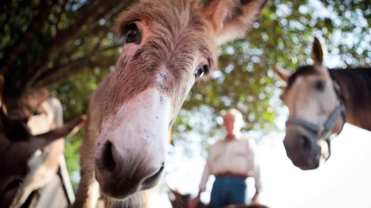 Big Oaks Rescue Farm REV 720p Animals, Big, Goats
