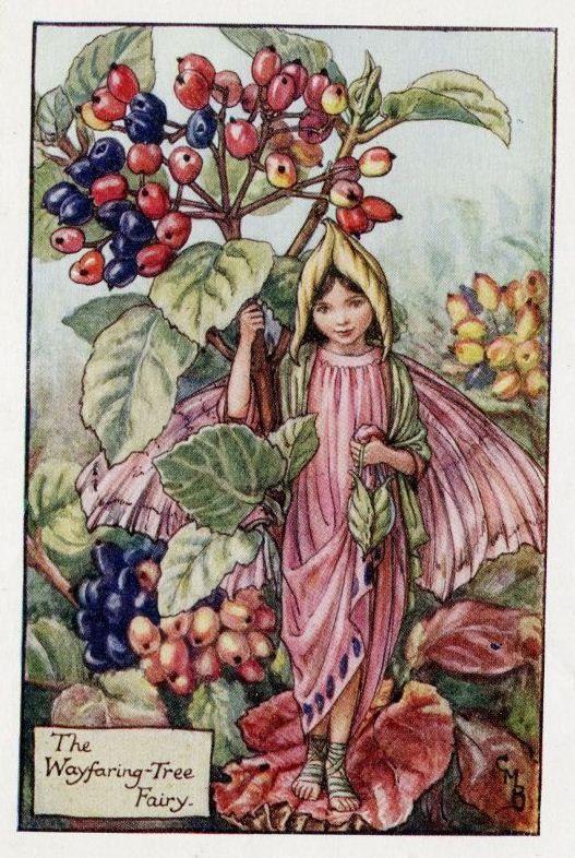 Wayfaring Tree Flower Fairy Vintage Print, c.1927 Cicely Mary Barker Book Plate Illustration