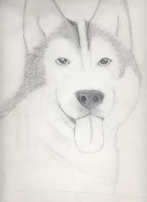 Pencil Dog Drawings Husky Drawing Cool Drawings Dog Drawing