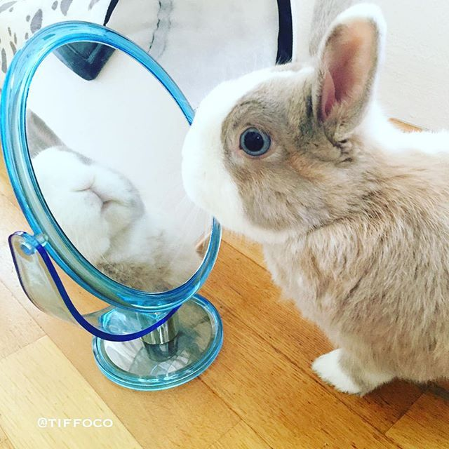 How can you be so sure hoomin... the bunny in the mirror cannot come out?? #Tiffo  Follow Tiffo on Instagram @tiffoco