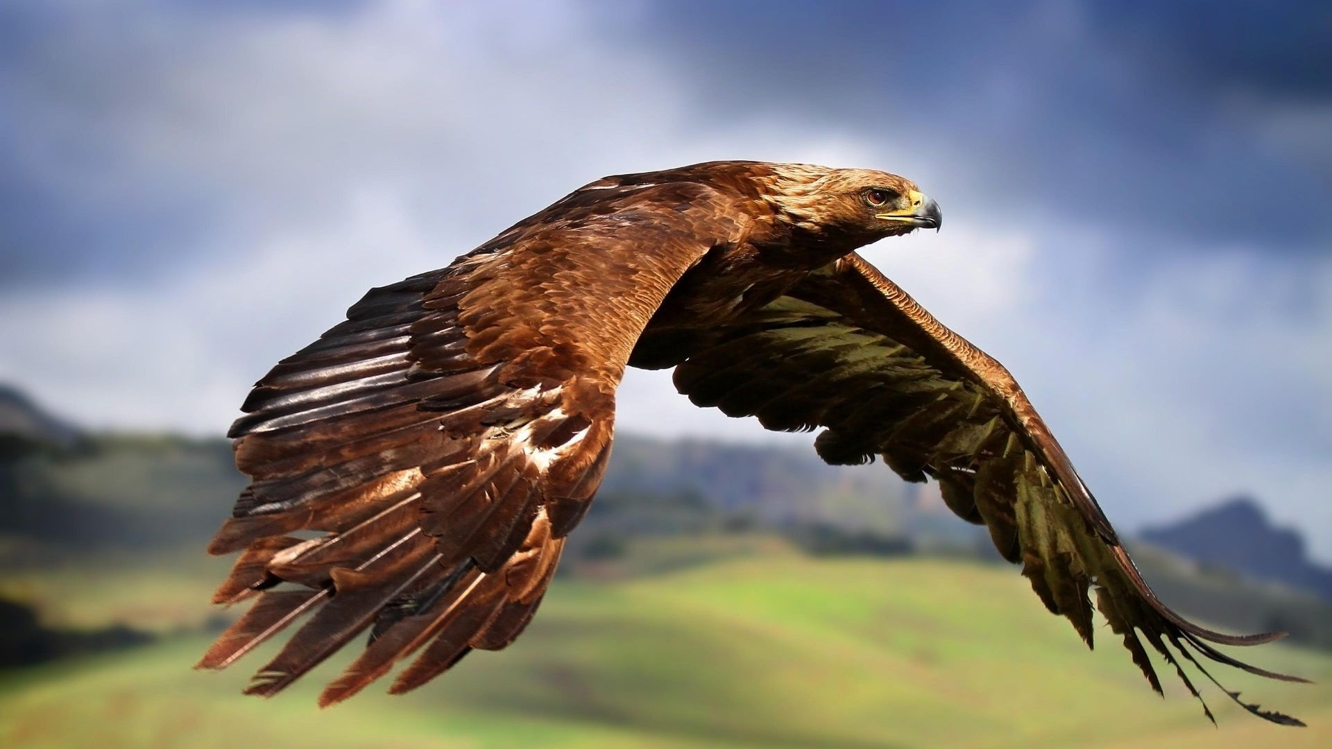 Eagle Wallpapers High Quality Download Free