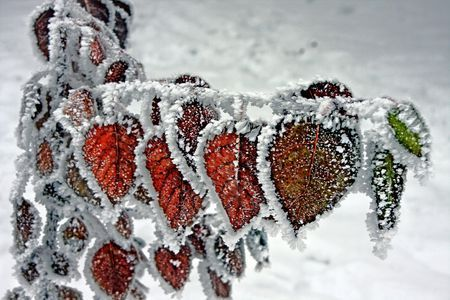 Spangled with frost  Photo by Ali Doosti -- National Geographic Your Shot