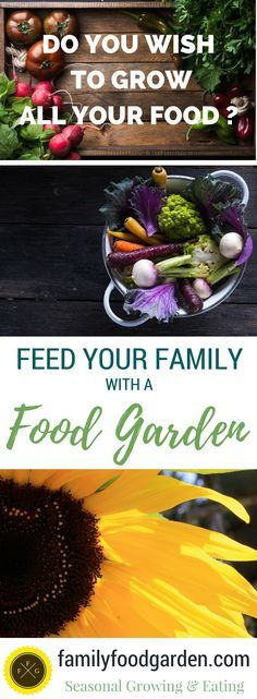Feed Your Family with a Garden