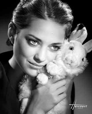 marion cotillard bunny!