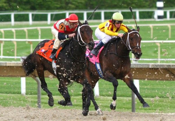 Predictz Today for Horse Racing | Predictz Today for Horse