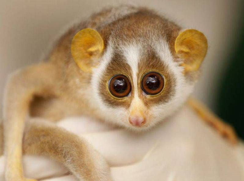 These cute exotic pets are ADORABLE! The 10 Cutest & Most