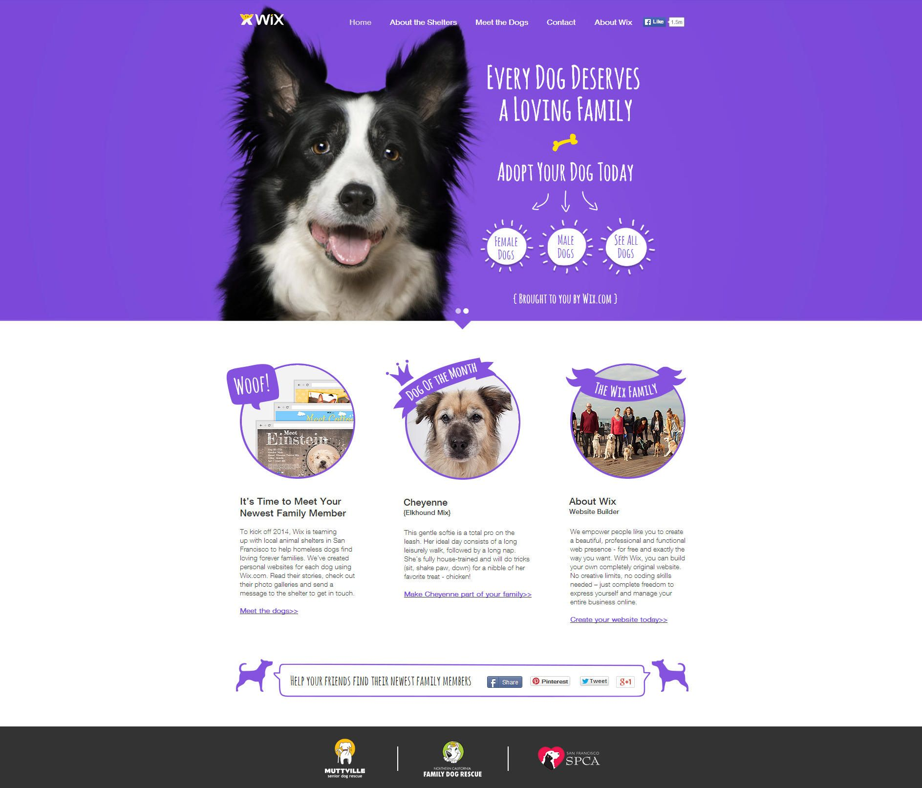 Wix Is Teaming Up With Shelters To Help Dogs Find Loving Homes We X27 Ve Designed Wix Websites For Each Dog Share Their Storie Your Dog Dogs Adoptive Family