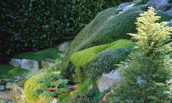habiller un talus pentu escalier jardin pinterest tiered garden garden et terrace. Black Bedroom Furniture Sets. Home Design Ideas