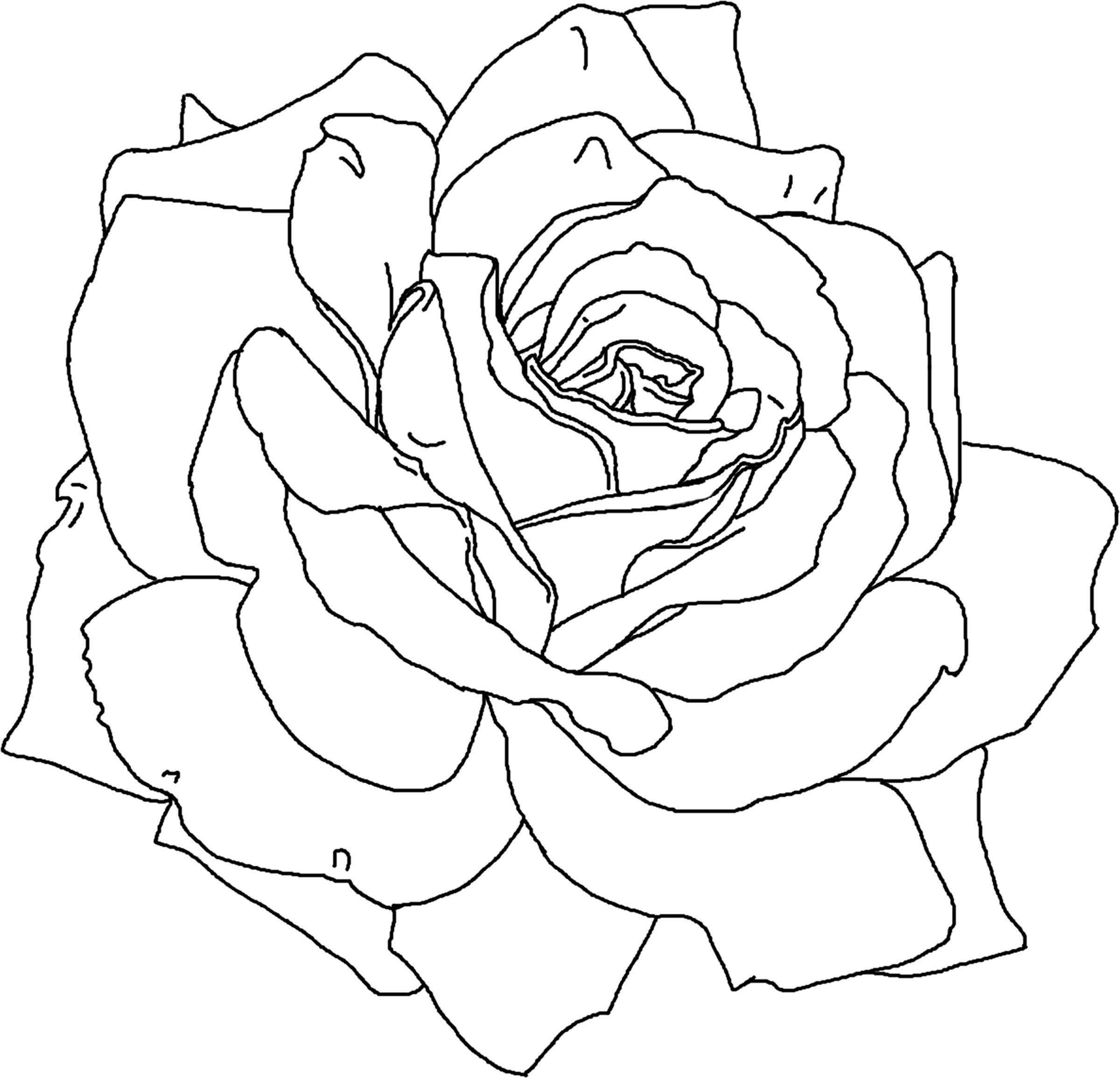 Download and Print rose flower coloring pages printable | school ...