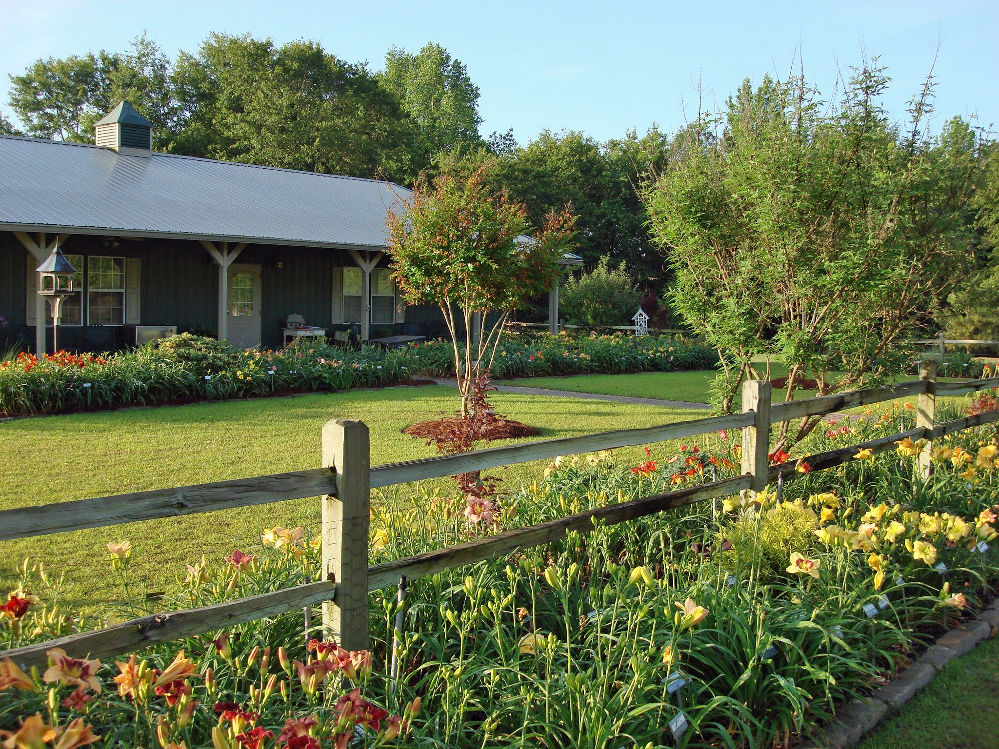 CAROLINA DAYLILIES DISPLAY GARDEN. Located In Lexington, SC And Just Across  The River From