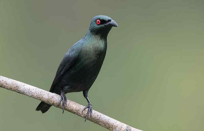Pin Oleh Informasi Komunitas Kicau Mani Di Perawatan Burung Di 2020 Burung Jenis