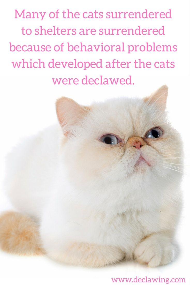 What You Need To Know Before You Declaw Your Cat Cat Health Pet Health Cats
