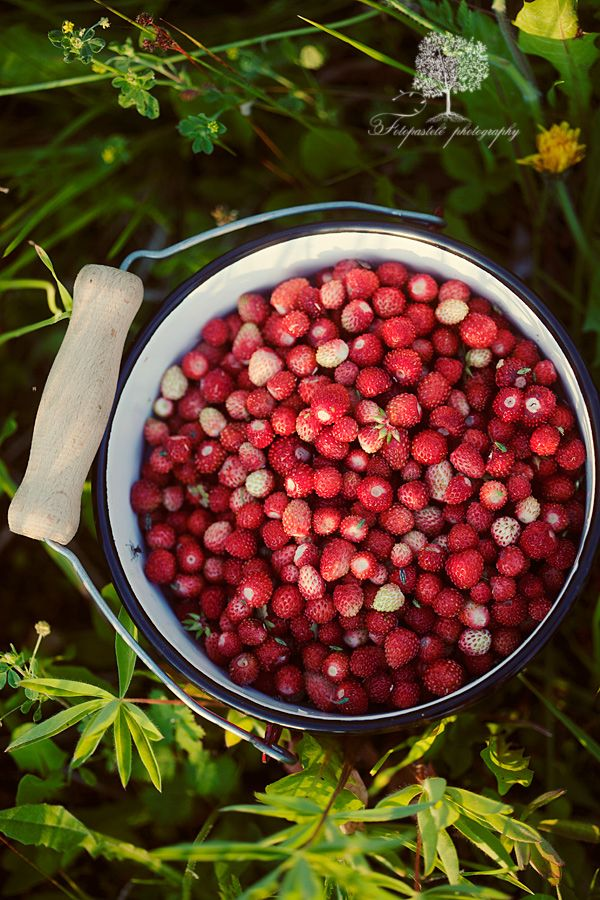 Wild Strawberries  (these little strawberries can be grown really easily in garden) In Poland called Poziomki they are little and sweet