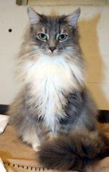 Adopt William on Cat sitting, Cats, Pets