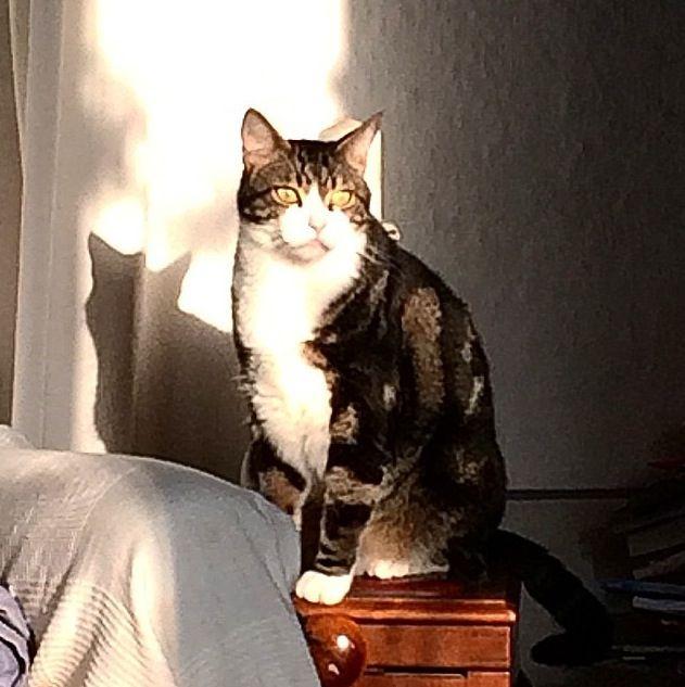 Romeo er mejo gatto der Colosseo