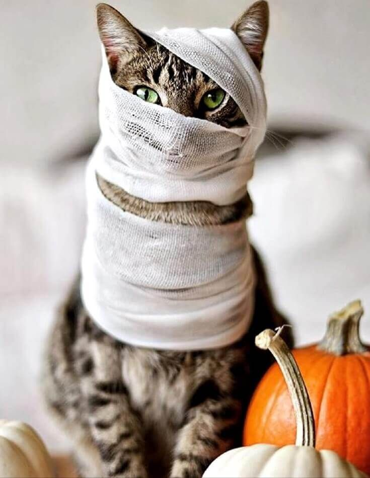 The 35 Greatest CAT Costumes EVER -   19 diy Halloween Costumes cat ideas