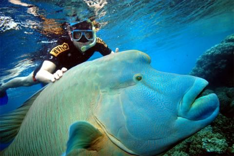 I don't want to go here -- this fish is scary. I do want to go to the Great Barrier Reef