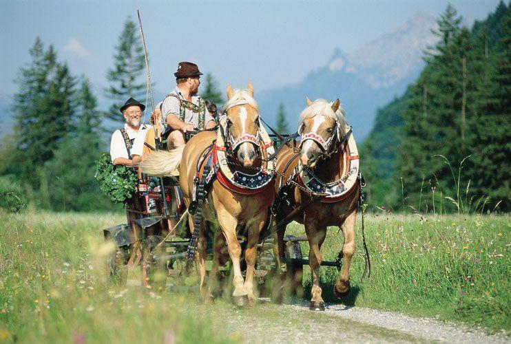 Pferdekutschfahrt Bei Oberammergau Bayern Pferd Oktoberfest