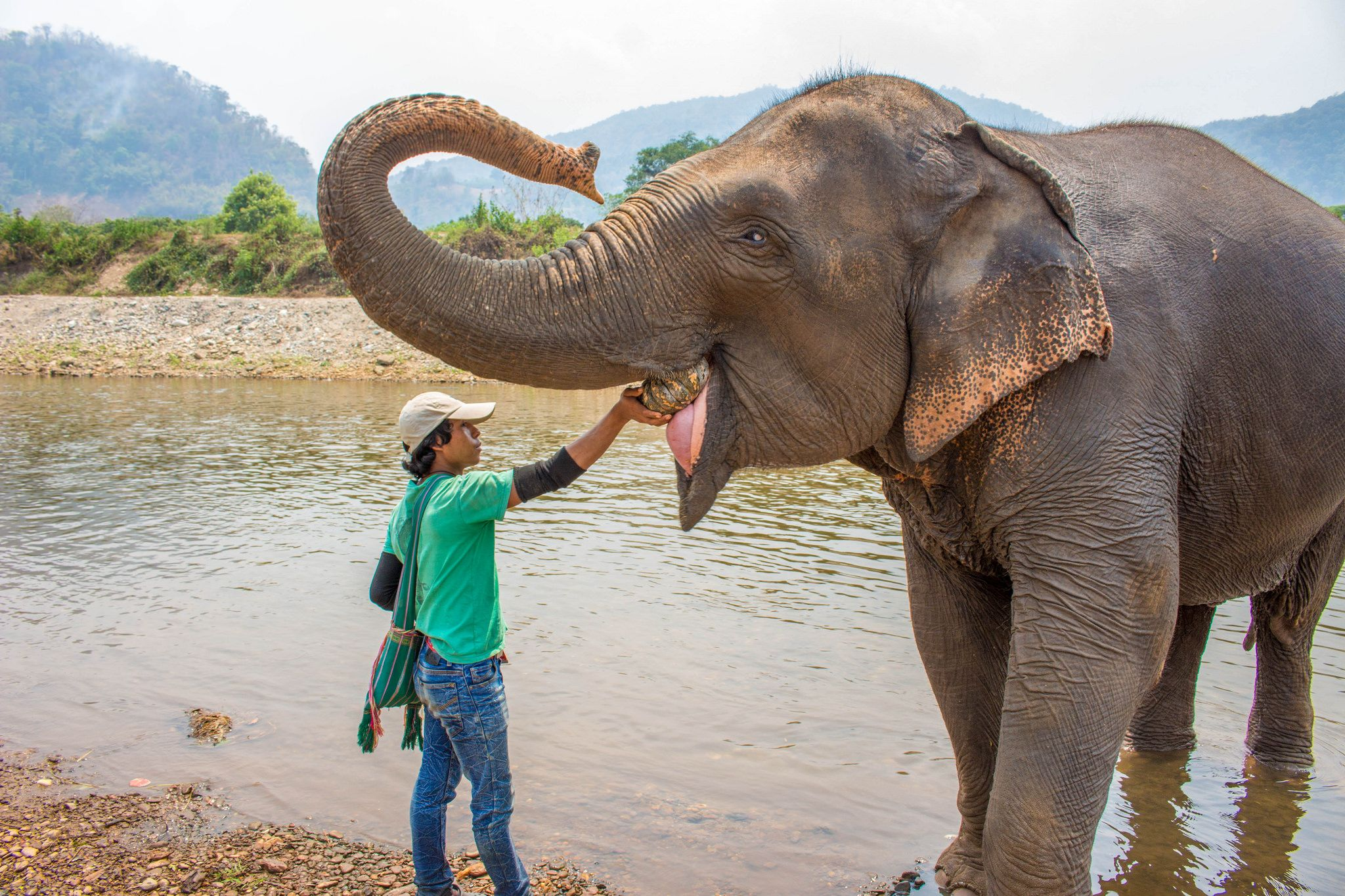 Love This Travel Blog Post About Elephant Nature Park - Chiang Mai, Thailand
