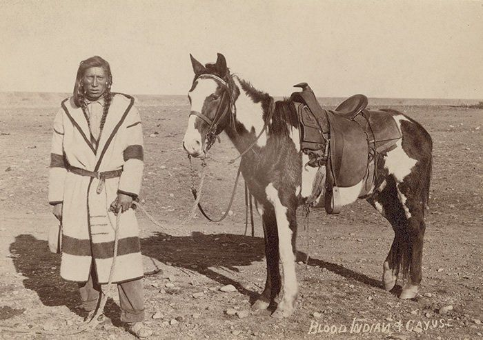 """Blackfoot (Kainai) man and horse (described as a """"cayuse"""" in photo) - 1882  In honor of the indigenous people of North America who have influenced our indigenous medicine and spirituality by virtue of their being a member of a tribe from the Western Region through the Plains including the beginning of time until tomorrow"""
