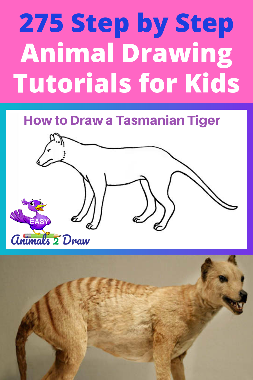 Learn How To Draw An Amazing Tasmanian Tiger With This Easy And Inspirational Step By Step Drawing Tasmanian Tiger Animal Drawings Cartoon Drawings Of Animals
