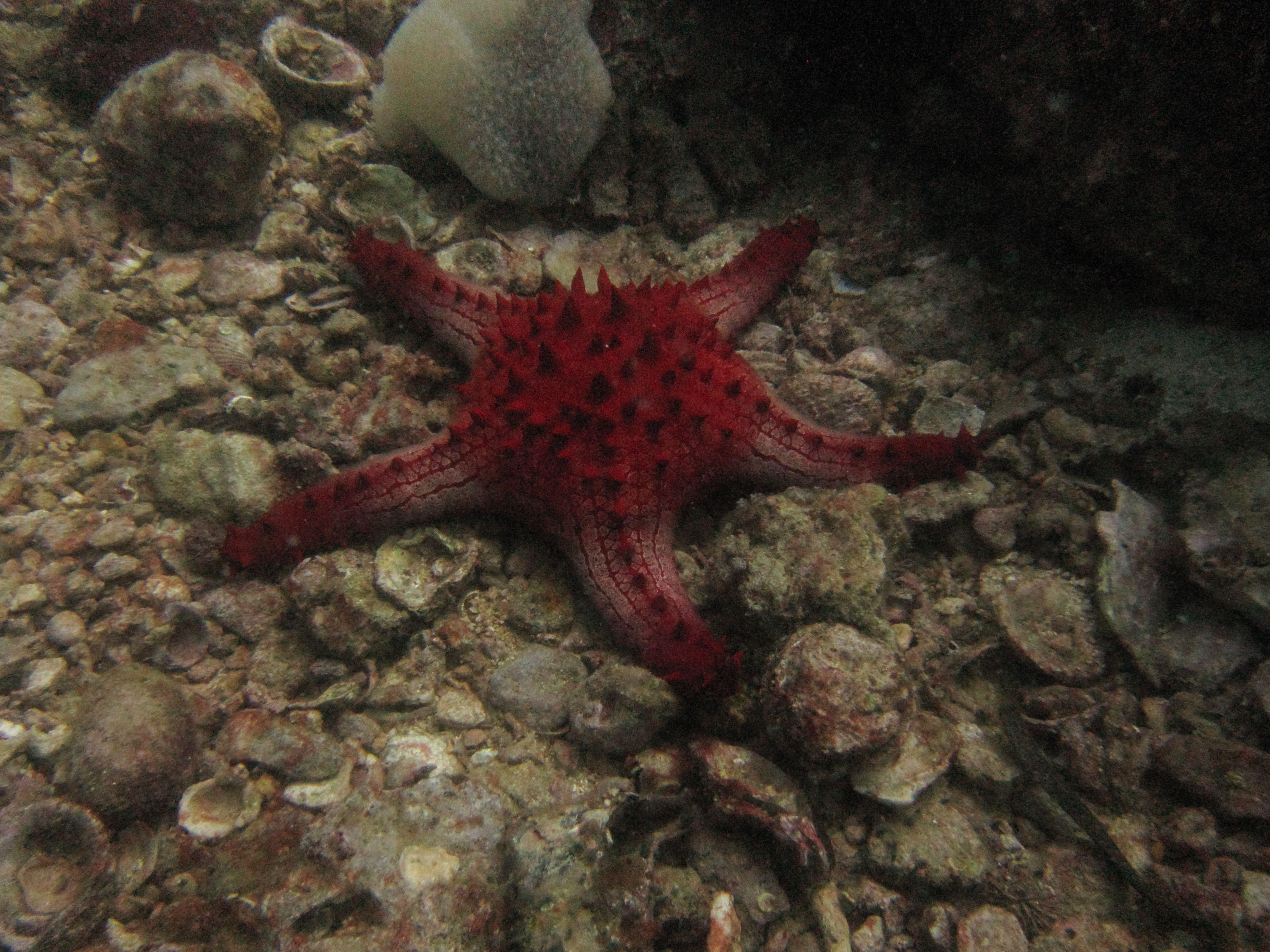 Starfish Anatomy Worksheet Nekton