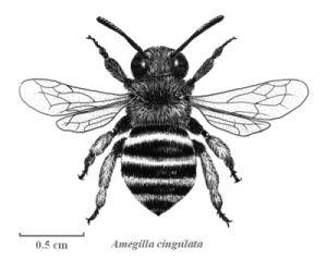 Bees Ebony 86