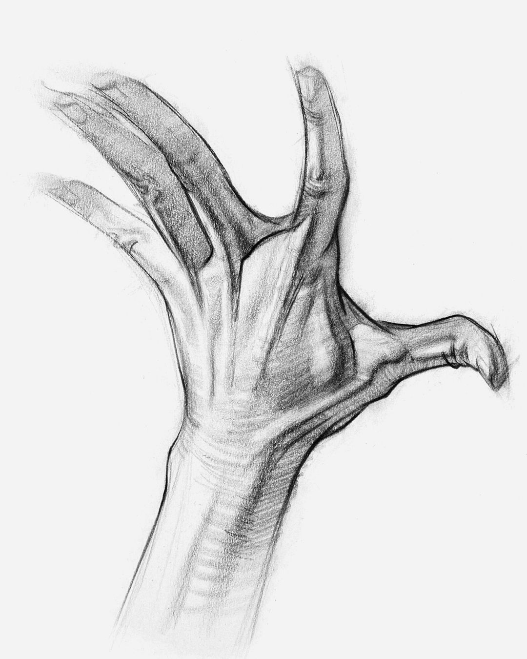 How To Draw Hands Muscle Anatomy Of The Hand Anatomy For Artists