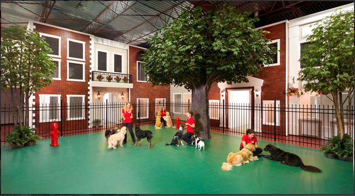 No Indoor Trees Or Fake Buildings Http Jetpetresort Com Dog Boarding Facility Pet Kennels Luxury Dog Kennels