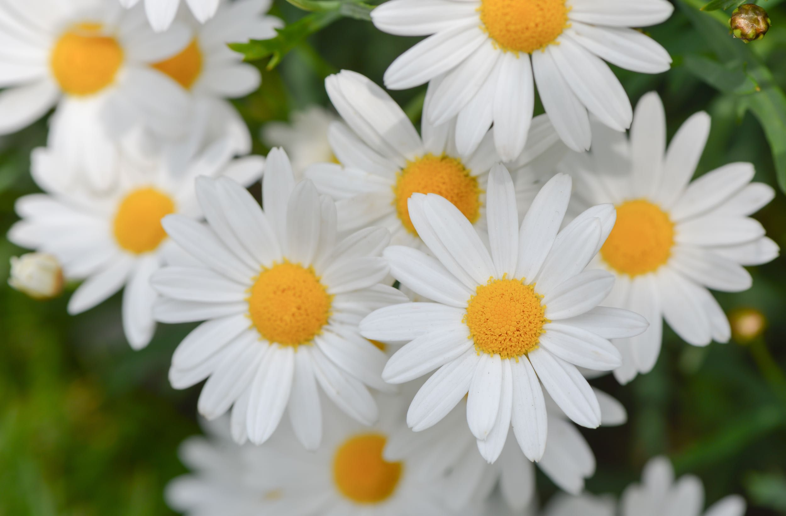 10 tips for landscaping on the cheap double down on perennials these 10 tips for landscaping on the cheap double down on perennials these are many plants that come back year after year instead of buying annuals and replacing izmirmasajfo