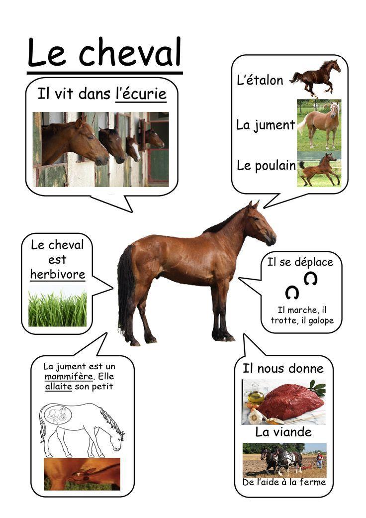R sultat de recherche d 39 images pour animaux ferme video documentaire maternelle classems - Compagnie des produits pour le jardin ...