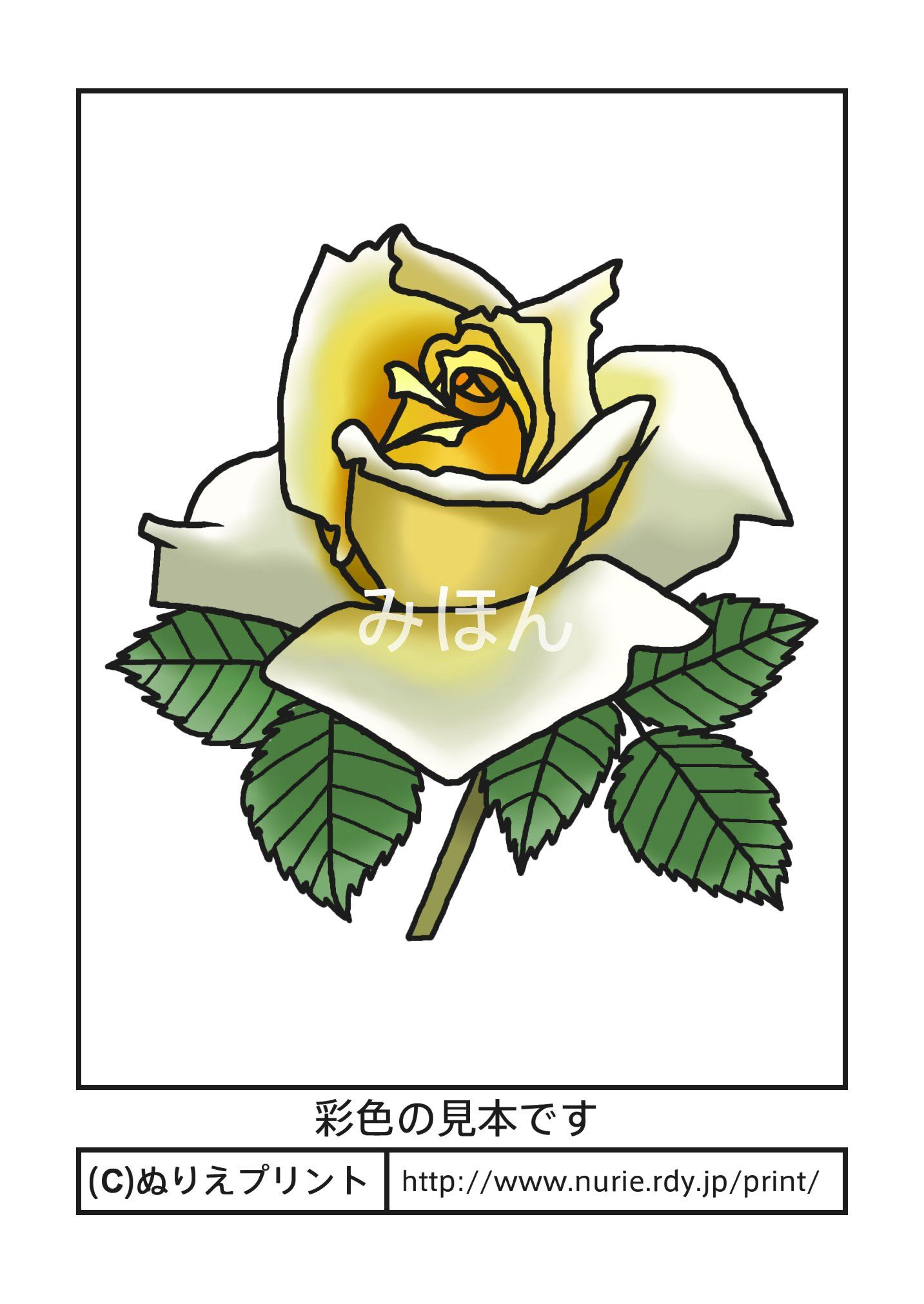 バラ6(彩色見本)/花の塗り絵/無料イラスト【ぬりえプリント】   a design