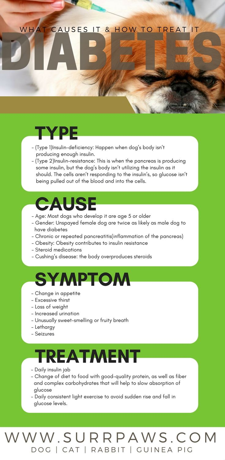 Dog Diabetes What Caused It And How To Treat It Pet Care Dogs Puppies Dog Remedies Pet Care Dogs