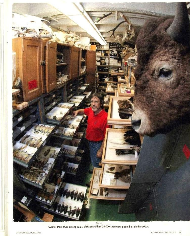 univ of montana zoology collection