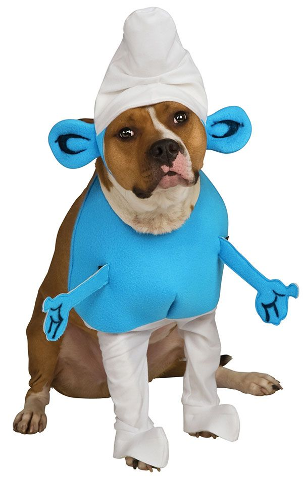 Smurf Dog This Should Be A Popular One This Year Dog Costumes