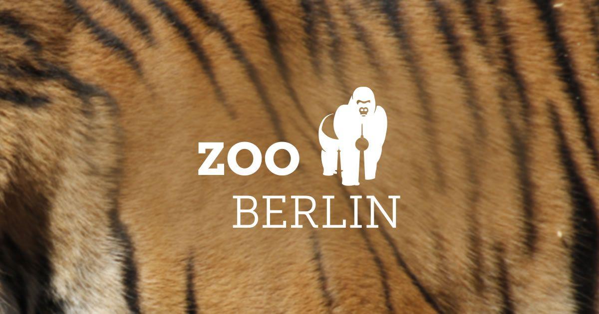 Der Zoologische Garten Berlin Ist Der Artenreichste Zoo Der Welt Besuchen Sie Uns Und Verbringen Sie Einen Unvergessliche Berlin With Kids Giraffe Feeding Zoo