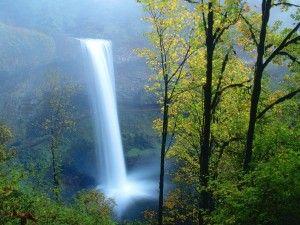 Cascada fluyendo en el parque estatal Silver Falls