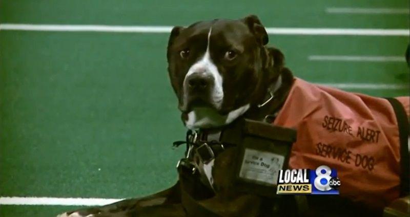 Un chien de service reçoit le diplôme de son maître décédé