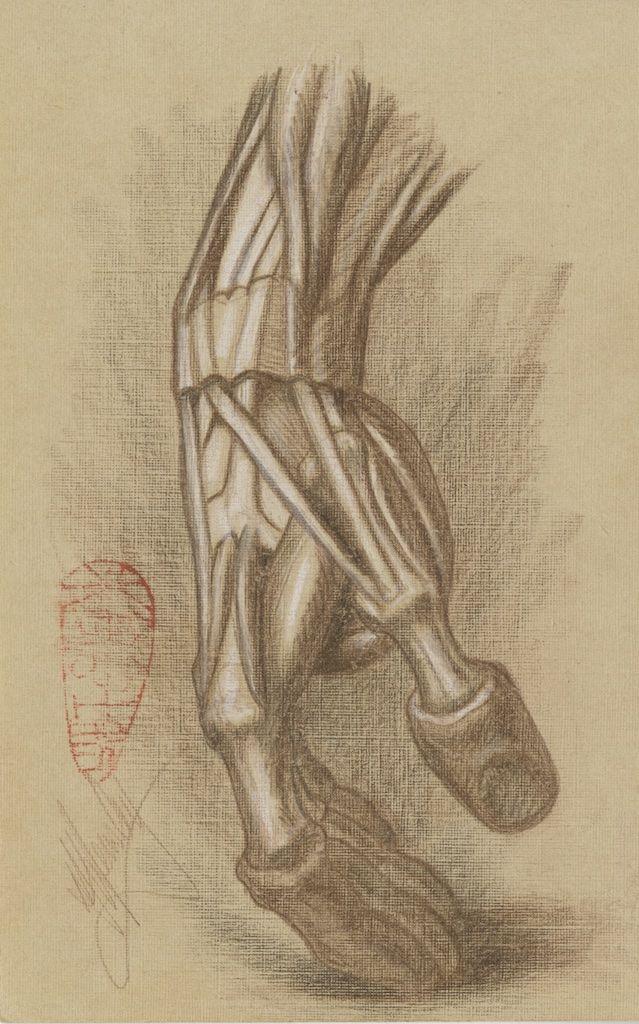 Michael Hensley Artistic Human Anatomy The Human Hand Foot