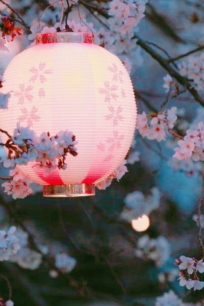 Pin By Sofia Bouroutzid On Cherry Blossoms Japan Culture Japanese Culture Japanese Lanterns