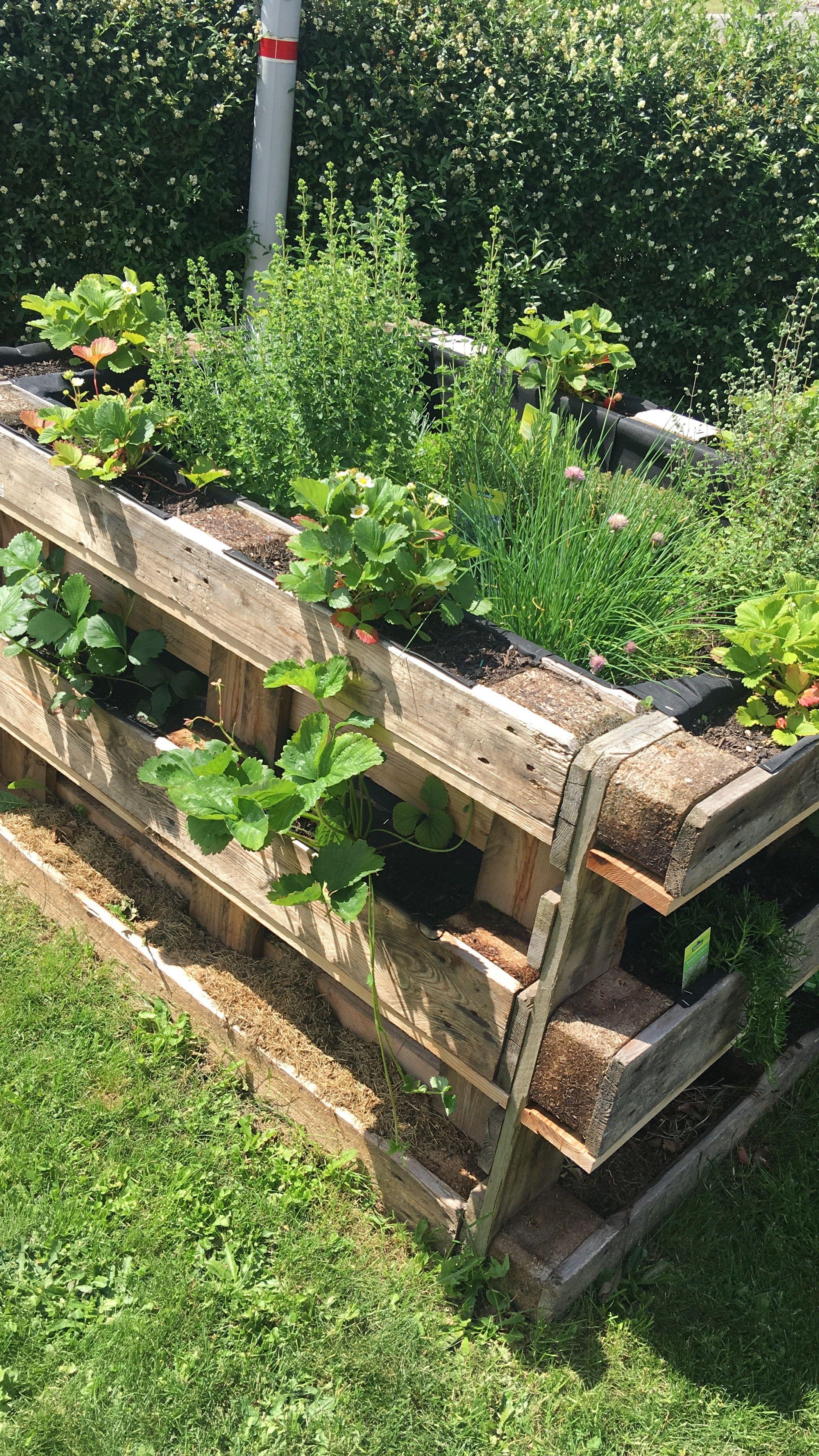 Erdbeeren Gartengestaltung Hochbeet Gartengestaltung Hochbeet